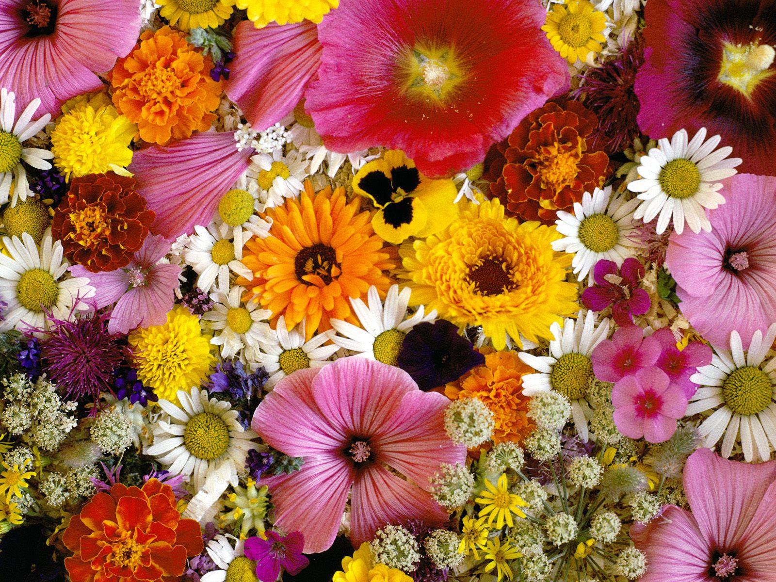 Ankara çiçek gönderme sitemize hoş geldiniz