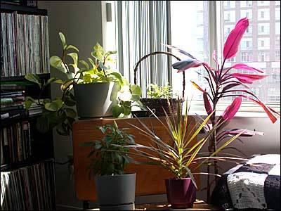 Ankara i ek sipari i salon bitkileri i mekan s s for Salon cicek turleri